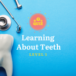Learning About Teeth Level 1 Quiz