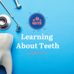 Learning About Teeth Level 2 Quiz
