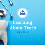 Learning About Teeth Level 3 Quiz